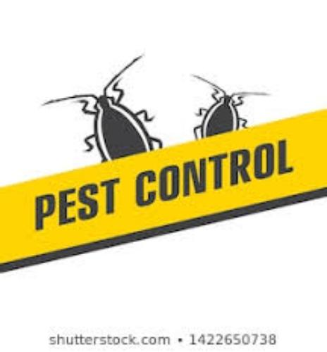 رش المنازل بالمبيدات الحشريه